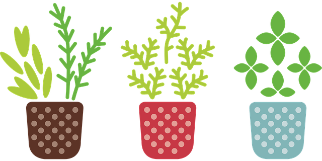 herb-817486_640.png