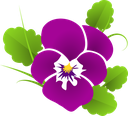 pansy-427139_640.png