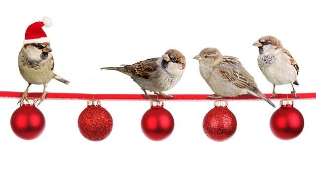sparrows-2900850_640.jpg